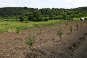 Baum für Baum zur neuen Herausforderung